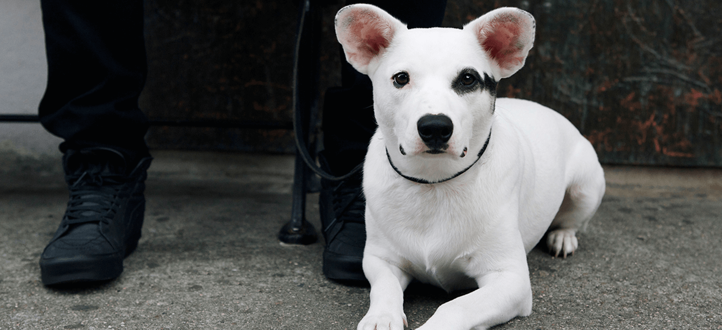 THAT'S WHY THEY CALL IT PUPPY LOVE – 5 ways a dog can make you happy in a way nothing else can