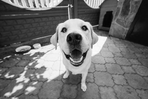 SCW_Pets